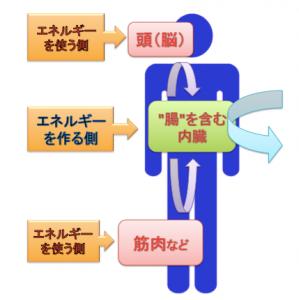 内臓のサイクル