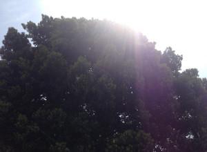 太陽は地球を元気にする