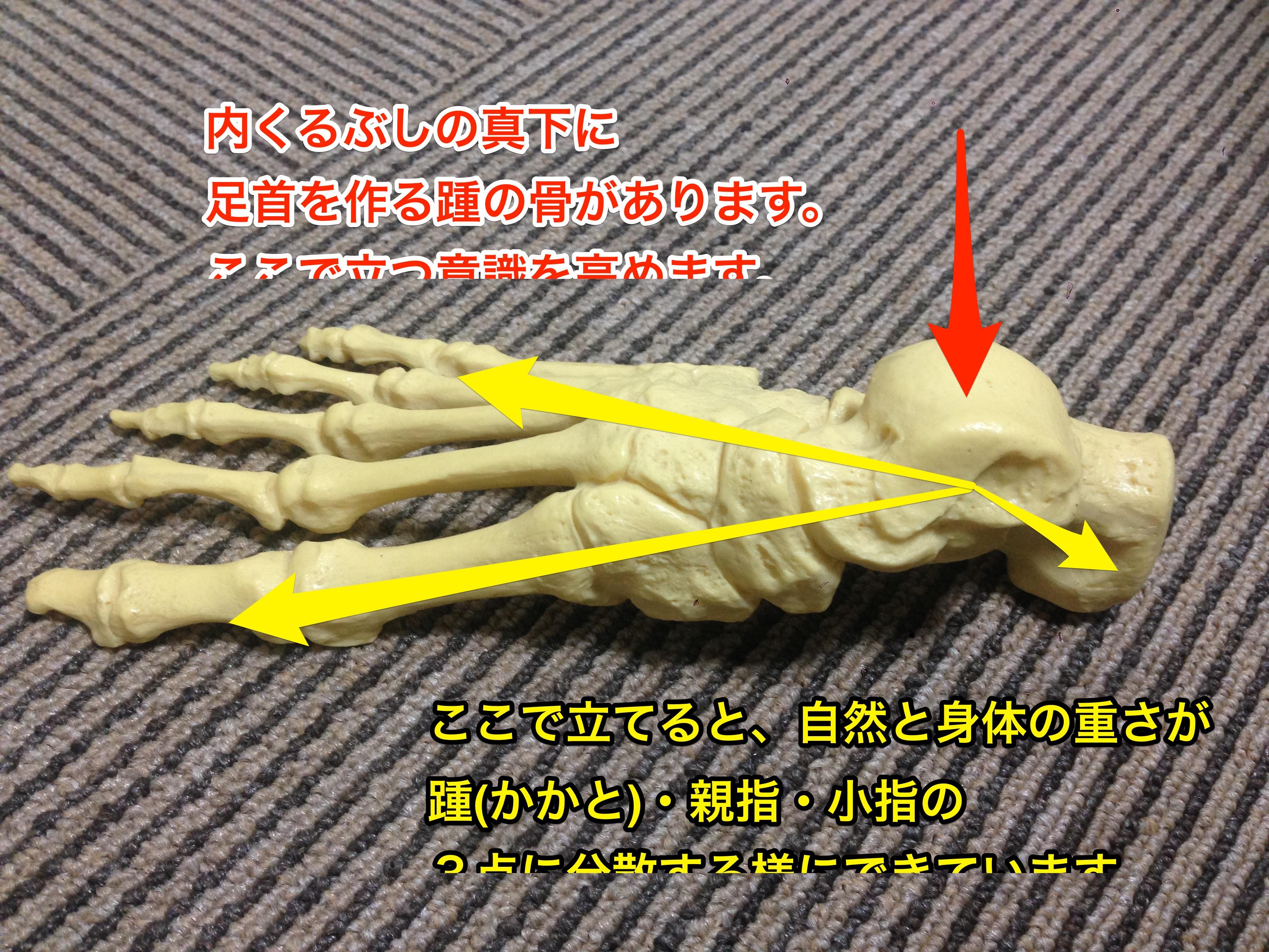 X,O脚などの形は重力の受け方で変わる!!